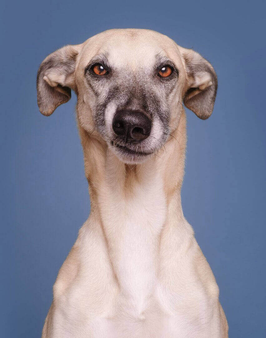 Собачье сомнение в адекватности фотографа