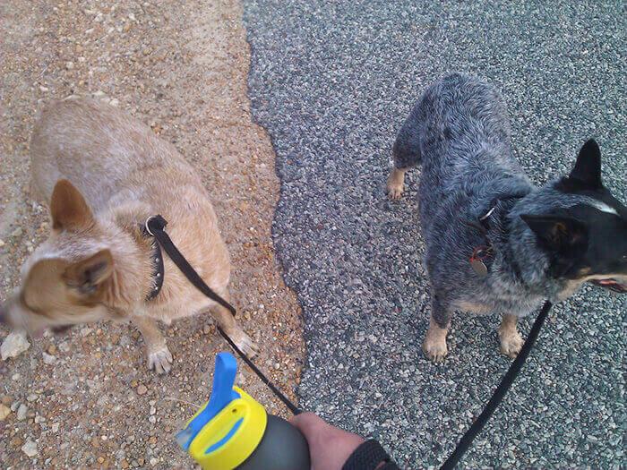 Собаки идеально вписываются в окружение
