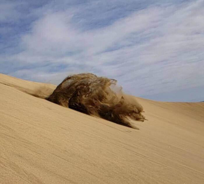 Упав в пустыне, я создал песчаного медведя