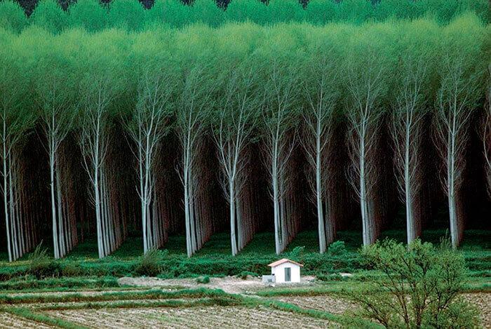 Идеальный лес