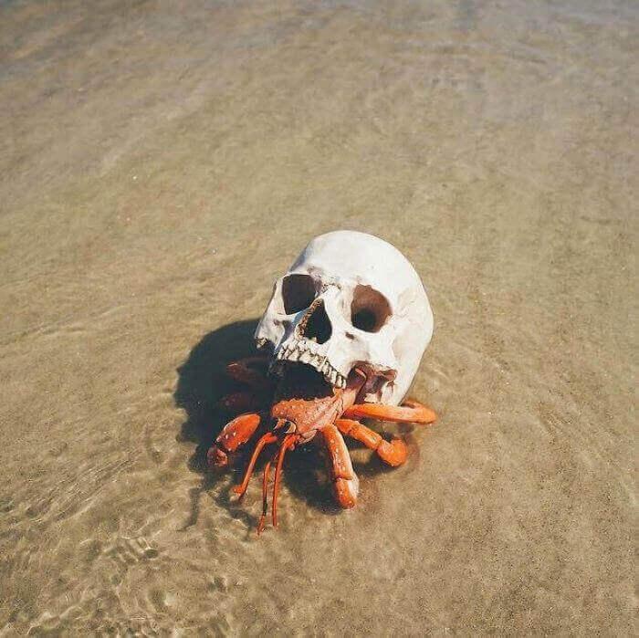 Краб-отшельник, использующий вместо раковины человеческий череп