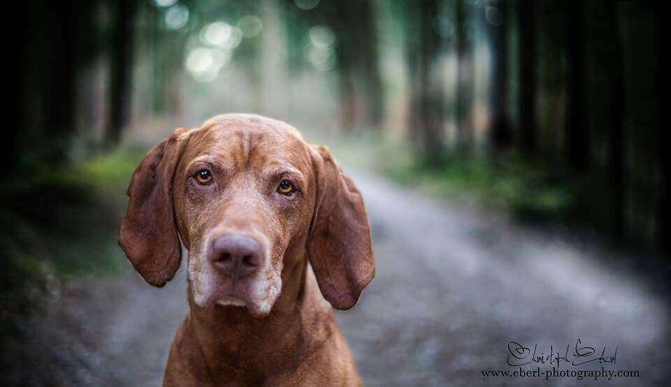 фото портреты собак