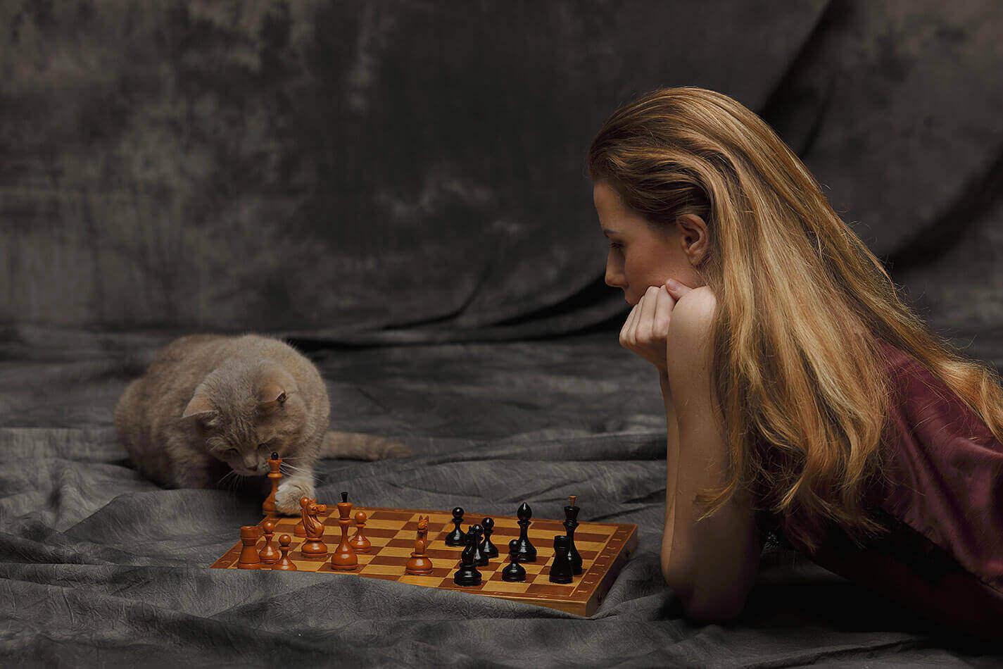 Кот-шахматист