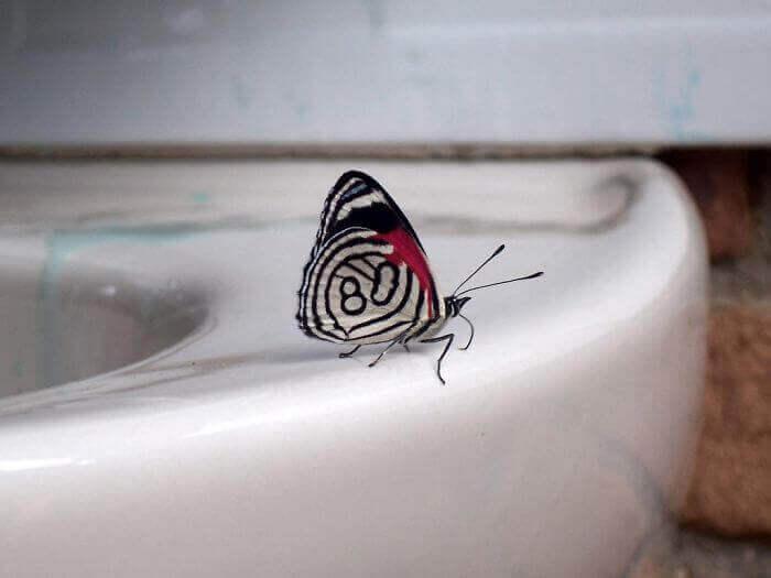 На крыльях бабочки нарисовано число