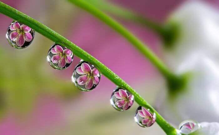 Увидеть цветок в капле воды