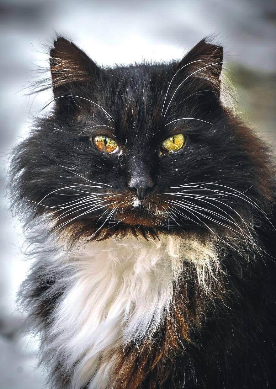 взгляд бездомной кошки