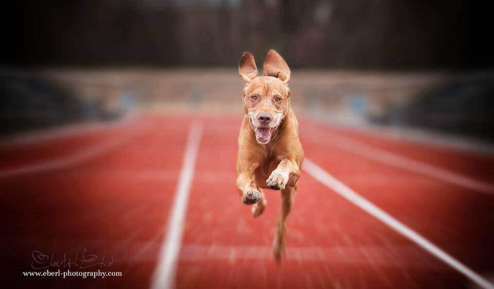 фотосессия собак