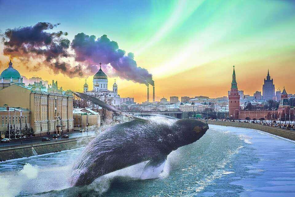 Кит плескается в городской реке