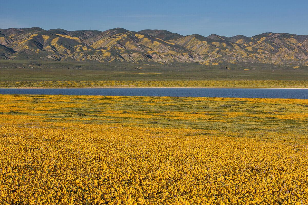 Цветущие холмы и пастбища равнины Карризо, Калифорния