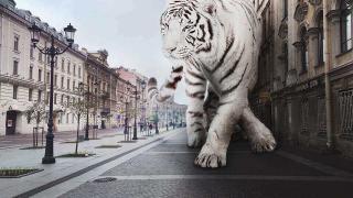 Белый тигр на улице