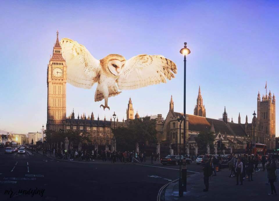 Сова летит над городом