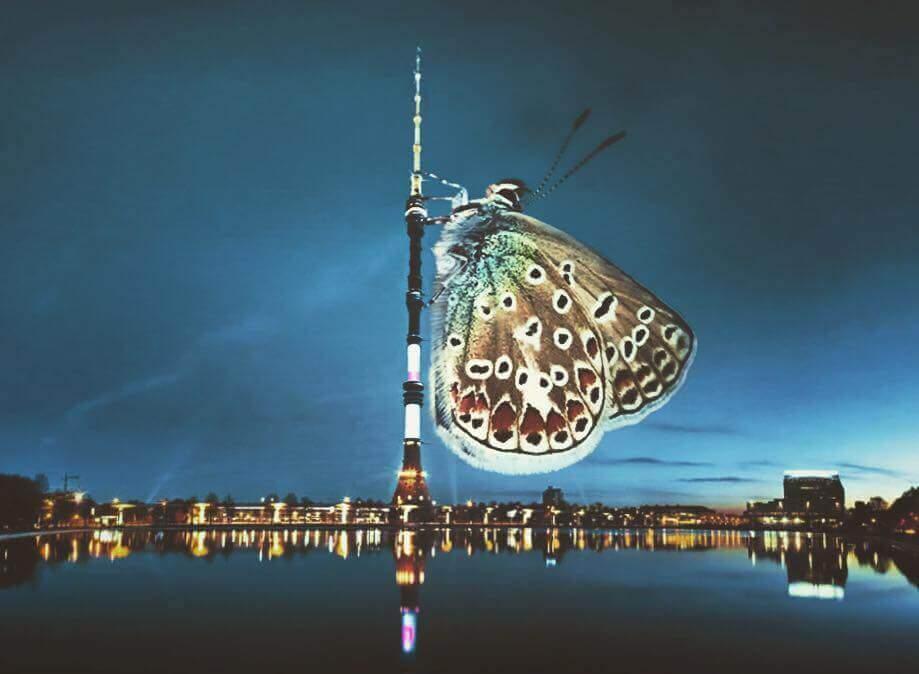 Бабочка на узкой высокой башне