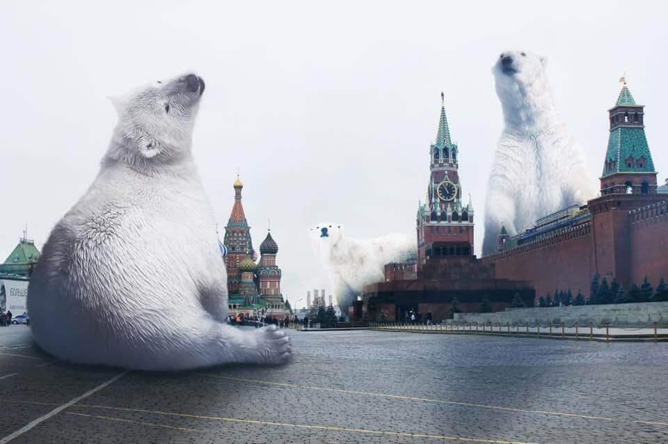 Белые медведи, Красная площадь