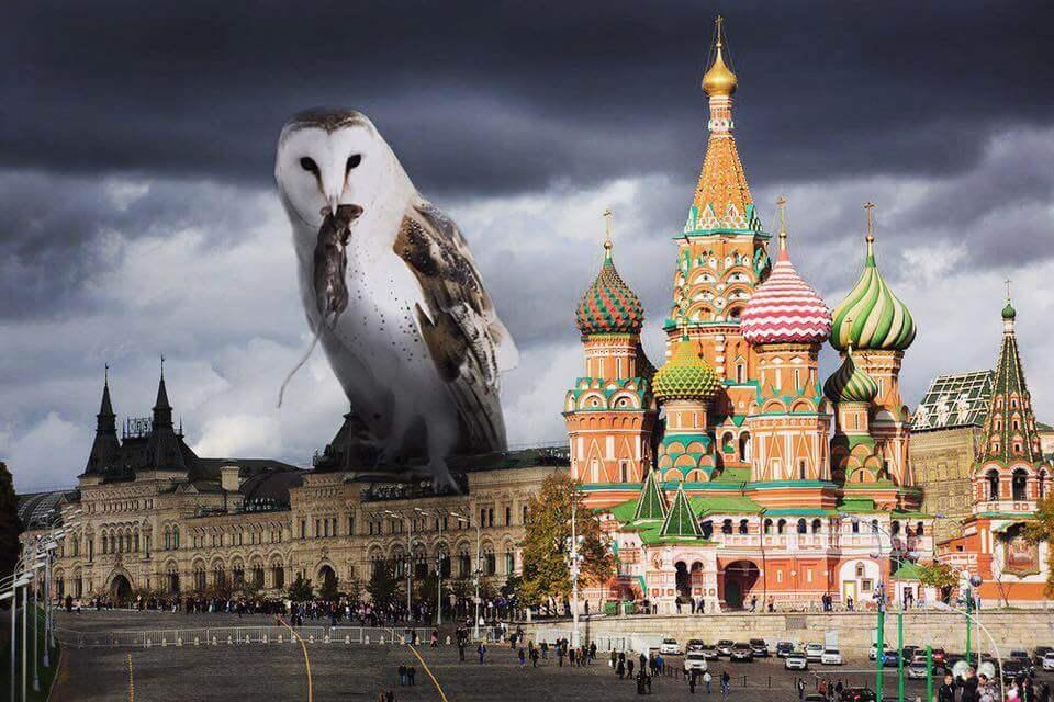 Огромная сова на крыше дома с добычей в клюве