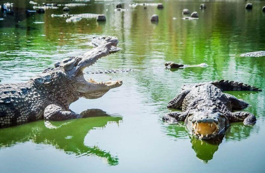 Клетка смерти или Крокозавр