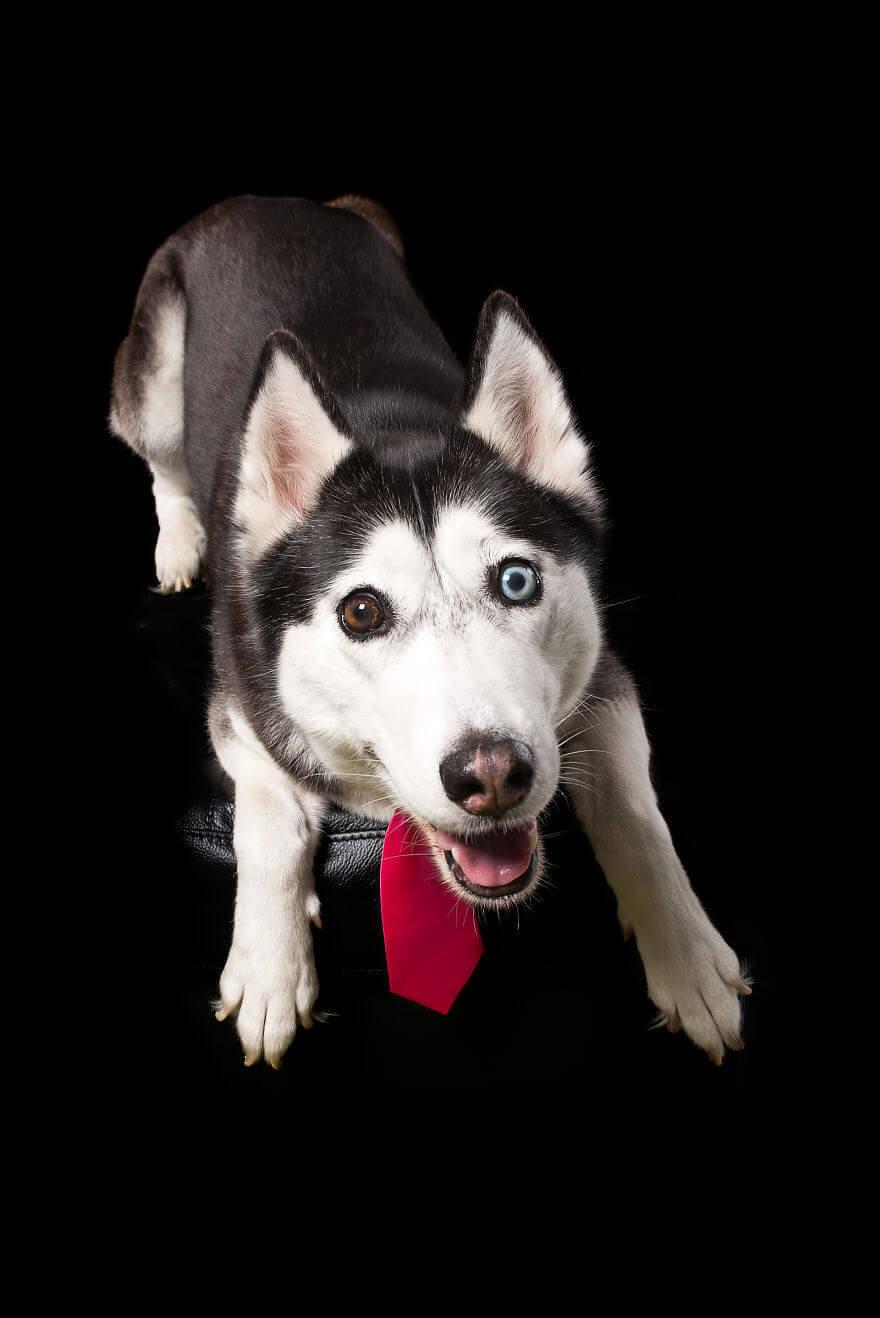 фото домашних собак