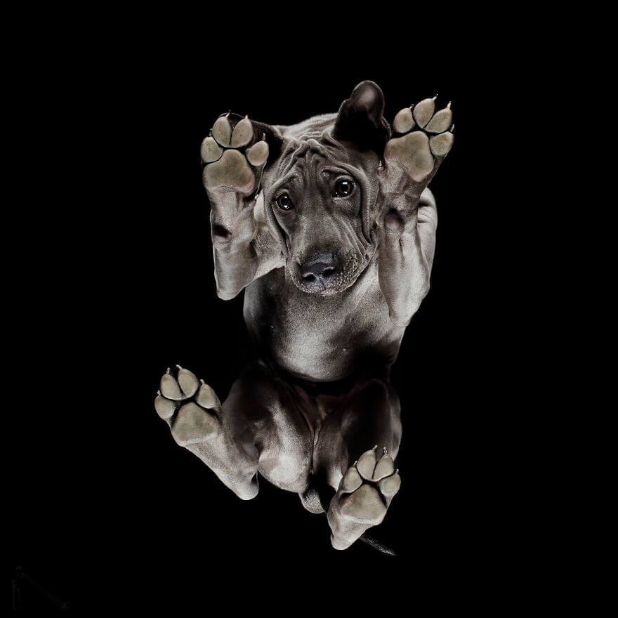 фото собак снизу