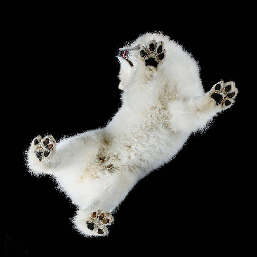 Собака на стекле