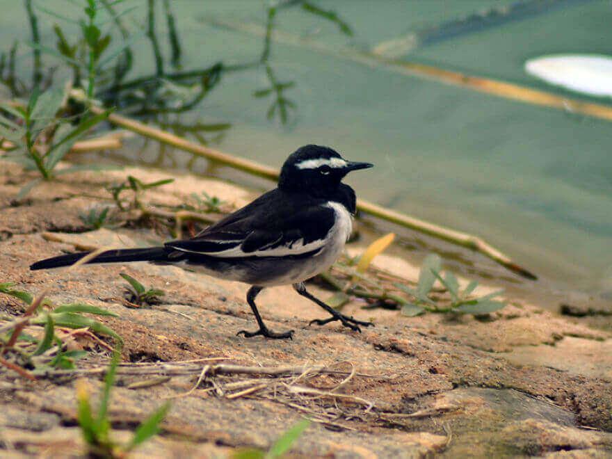 Птицы Индии