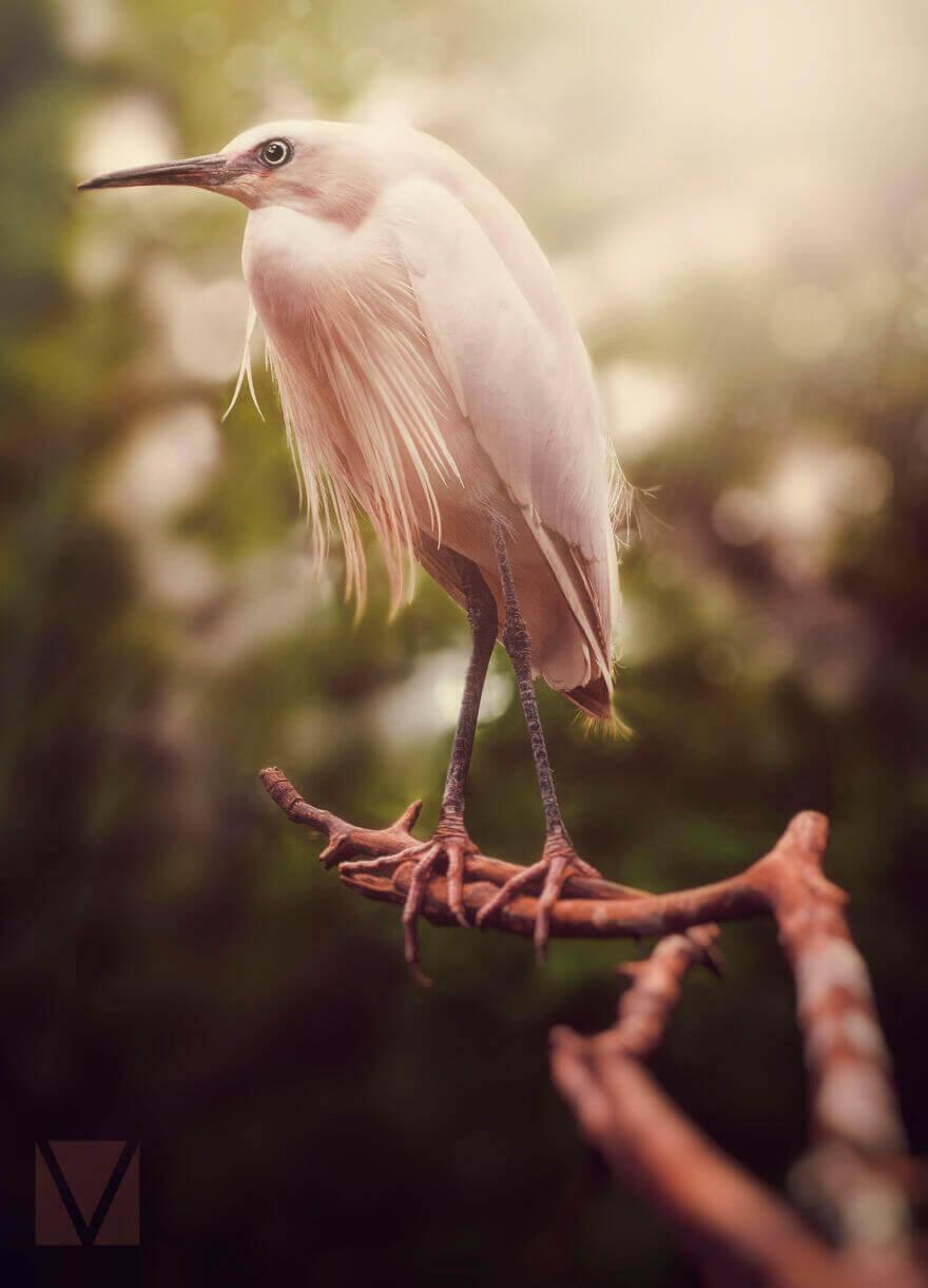 Розовая пташка