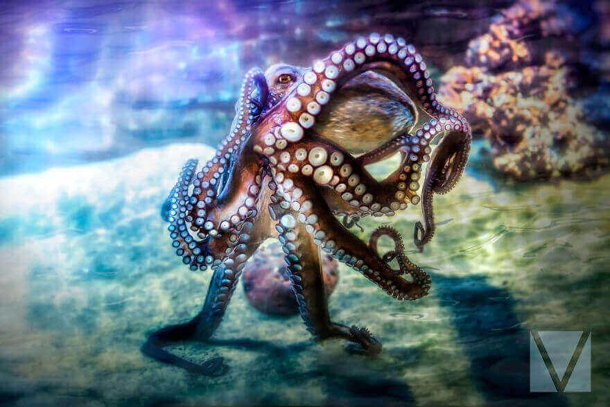 Восьминогий скакун