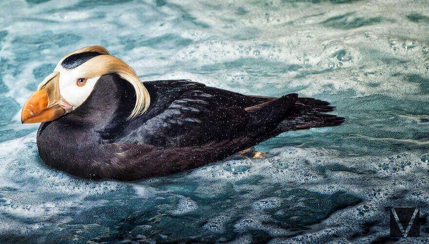 Подборка блестящих фотографий животных