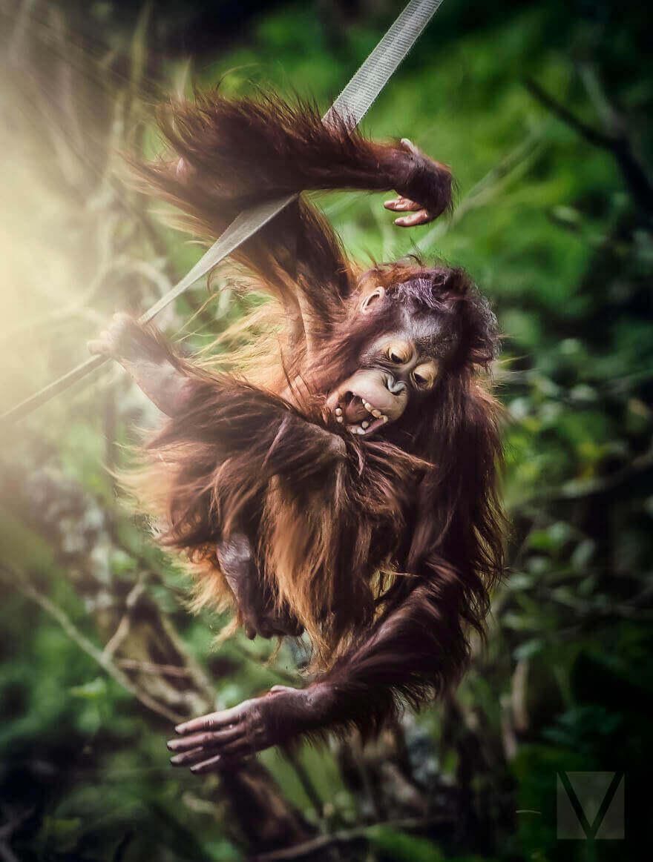 Нахальная обезьяна