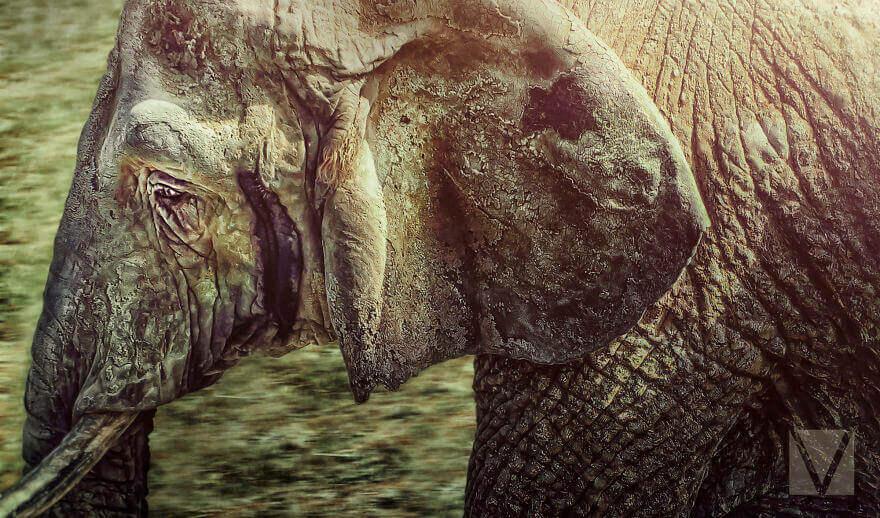 Запечатление личностей животных