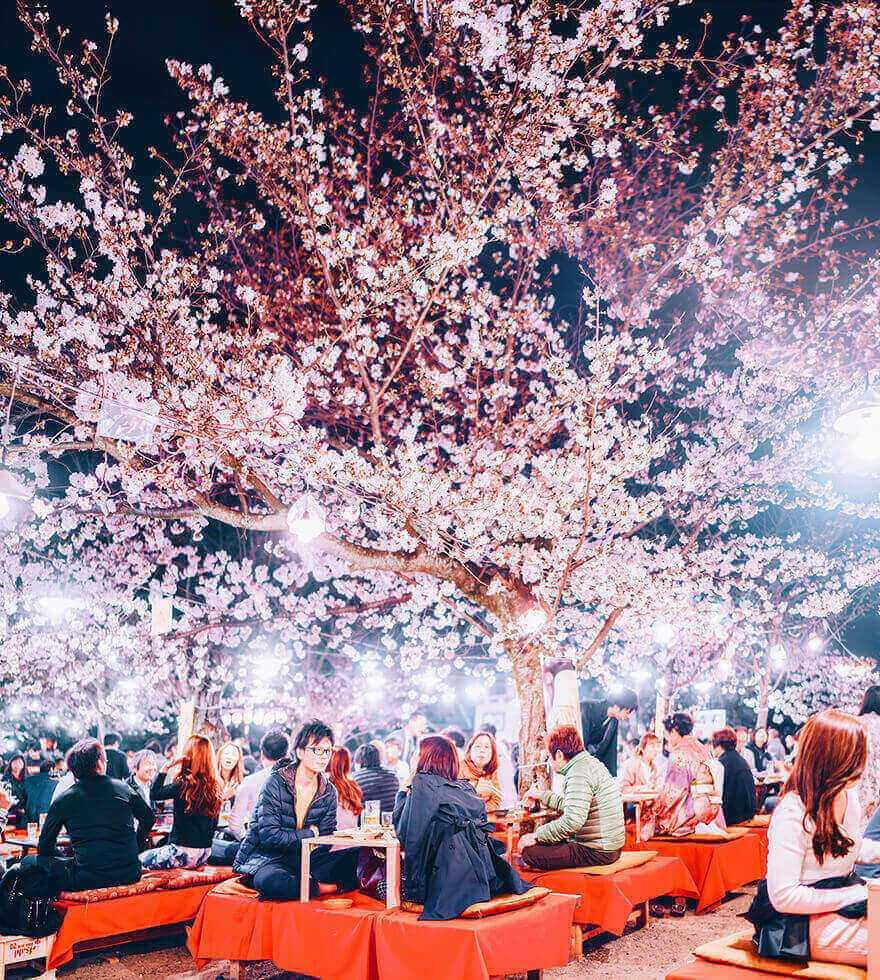 Цветение сакуры в Японии, Киото
