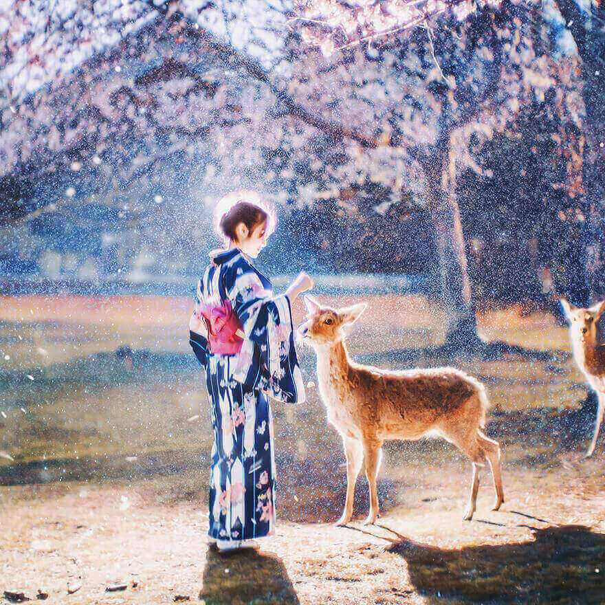 Цветение сакуры в Японии, Нара