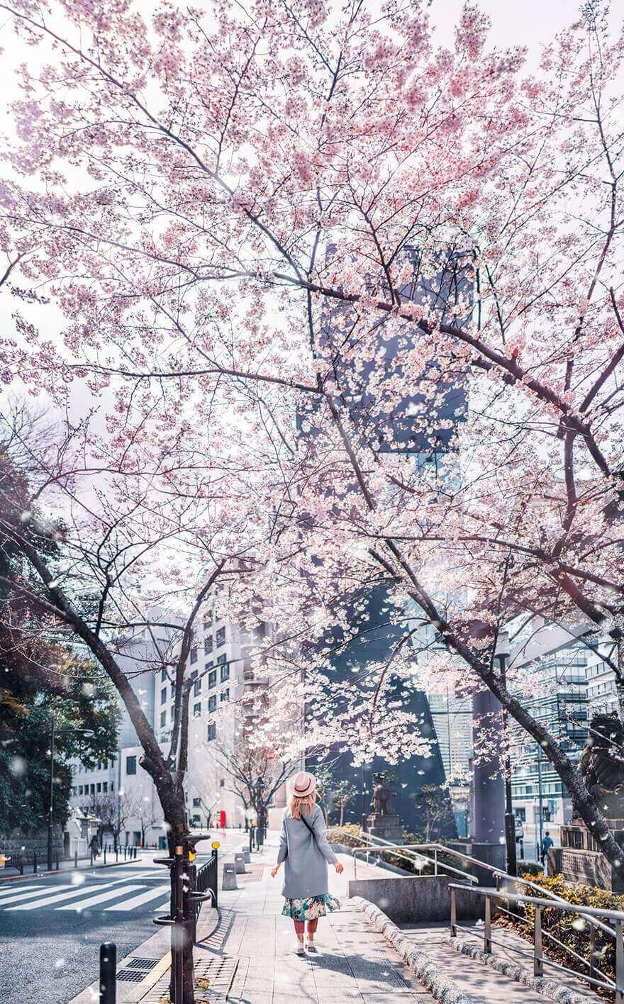 Цветение сакуры в Японии, Токио, Асакуса