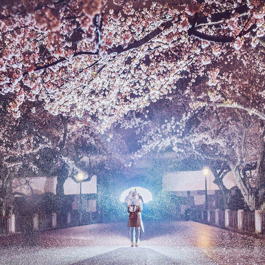 Цветение сакуры в Японии, Токио, Чидоригафучи