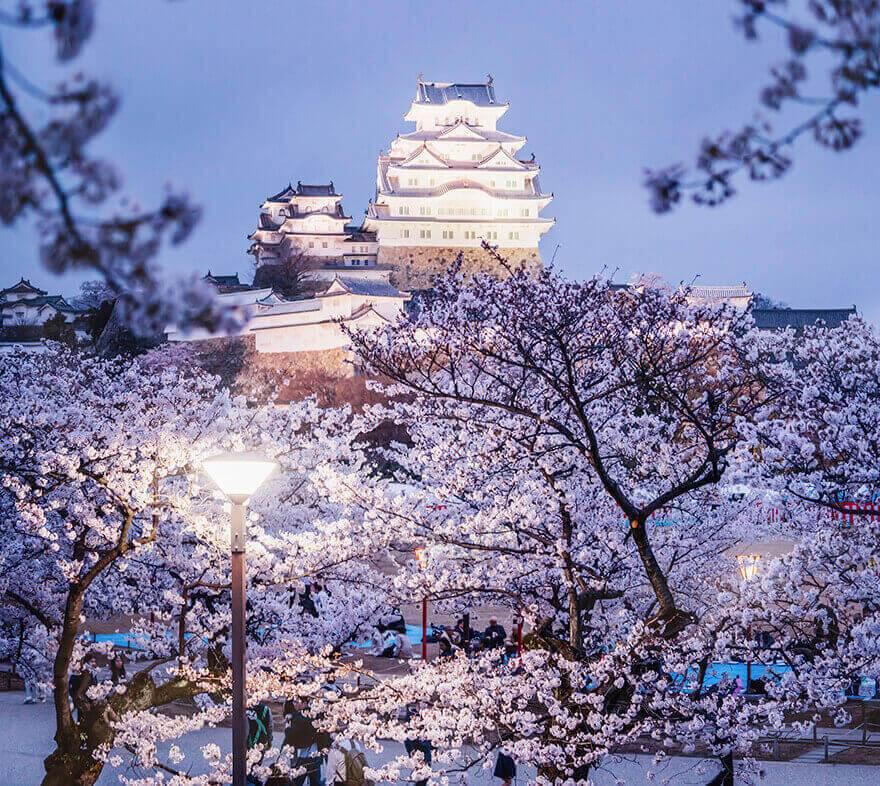 Цветение сакуры в Японии, Замок Химэдзи