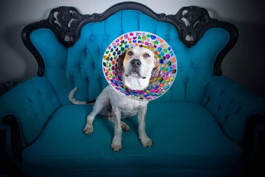 фотопроект о бездомных собаках