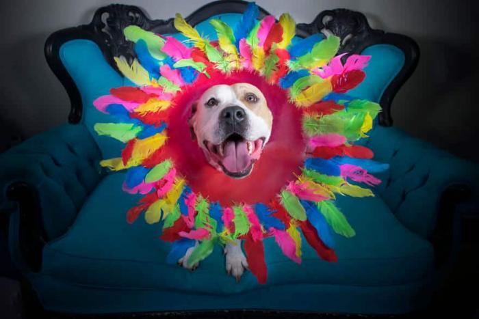«Конусы славы» — фотопроект о бездомных собаках