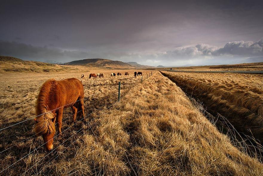 красота северного сияния в Исландии