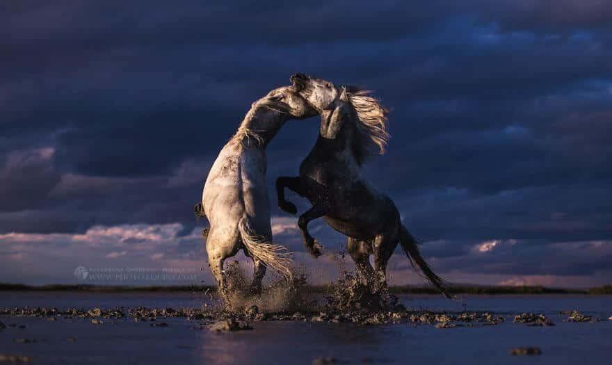 фотографий лошадей, скачущих по волнам океана, фото 1