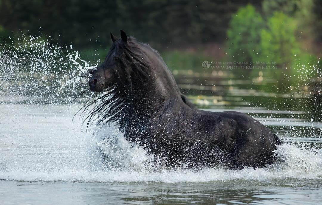 фотографий лошадей, скачущих по волнам океана, фото 10
