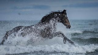 фотографий лошадей, скачущих по волнам океана, фото 11