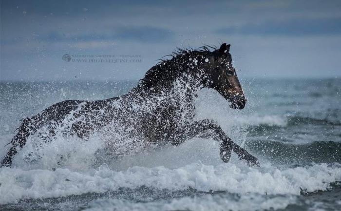 Потрясающая серия фотографий лошадей, скачущих по волнам океана
