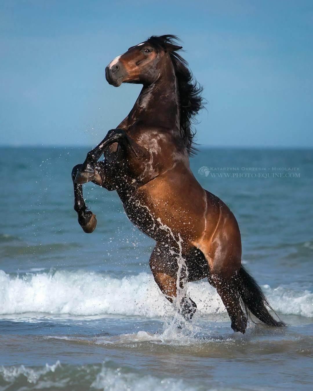 фотографий лошадей, скачущих по волнам океана, фото 12