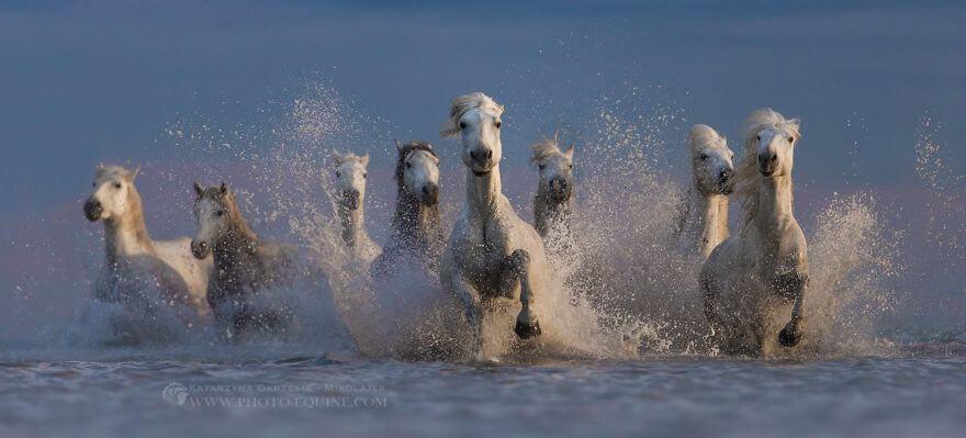 фотографий лошадей, скачущих по волнам океана, фото 2