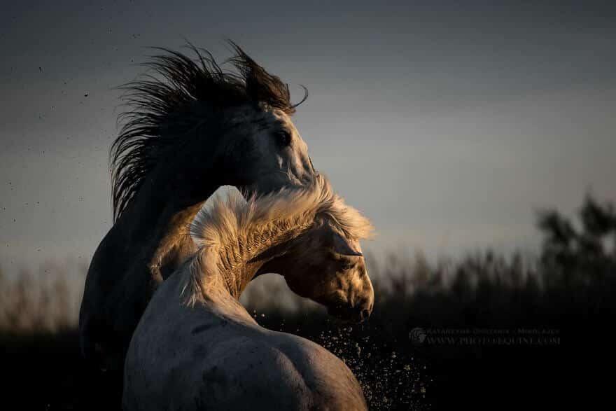 фотографий лошадей, скачущих по волнам океана, фото 3