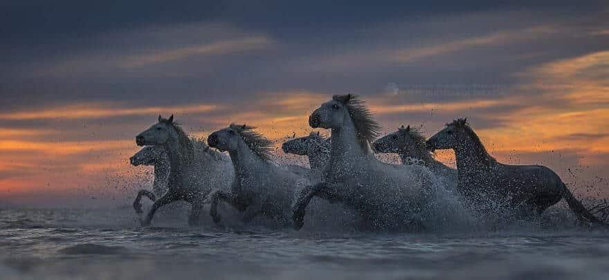 фотографий лошадей, скачущих по волнам океана, фото 4