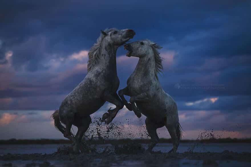 фотографий лошадей, скачущих по волнам океана, фото 5