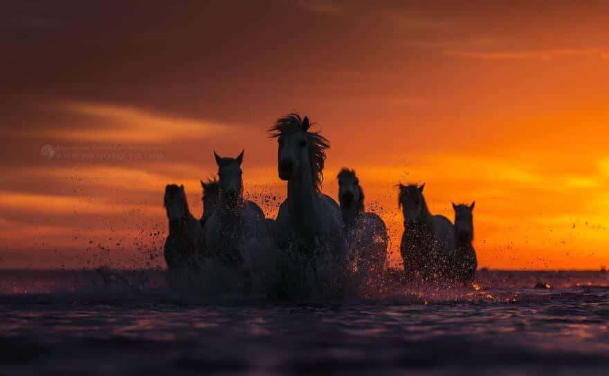 фотографий лошадей, скачущих по волнам океана, фото 6