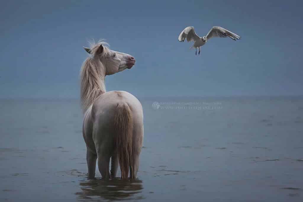 фотографий лошадей, скачущих по волнам океана, фото 7