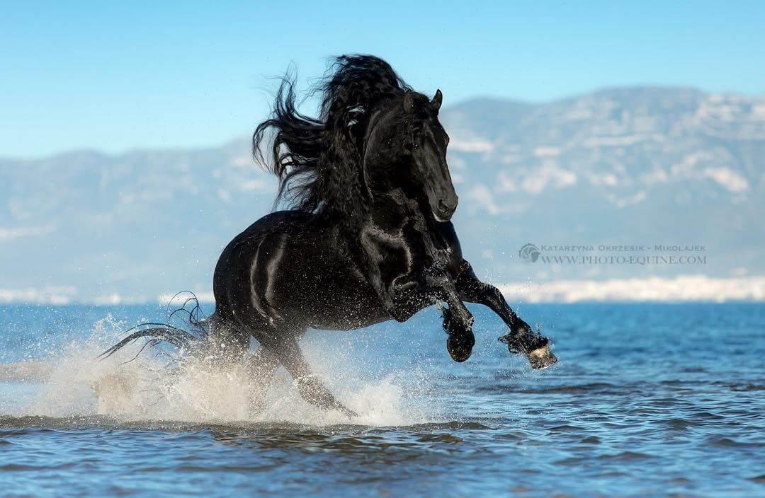 фотографий лошадей, скачущих по волнам океана, фото 8