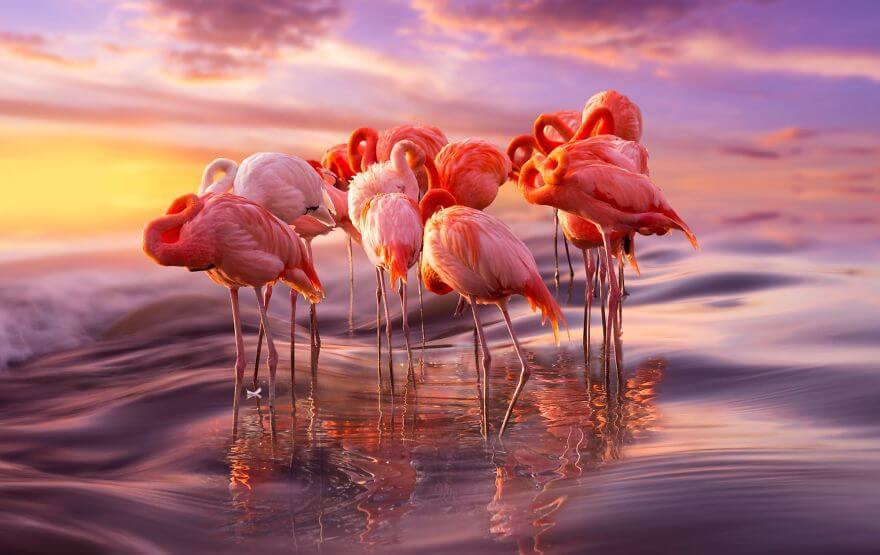 птица розовый фламинго, фото 1