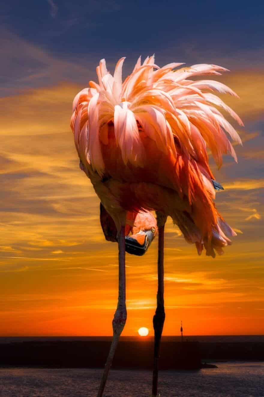 птица розовый фламинго, фото 17